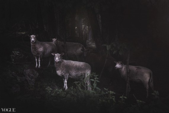 The Black Sheep Photographer Anja Butti