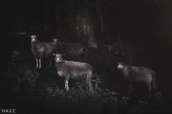 The Black Sheep Photographer Anja Butti